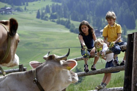 Holidays in the Anterselva Valley: Rural idyll on the farm Steinzgerhof